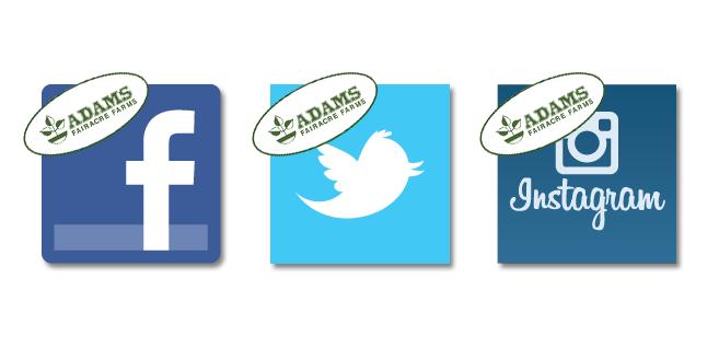 Adams Social Media